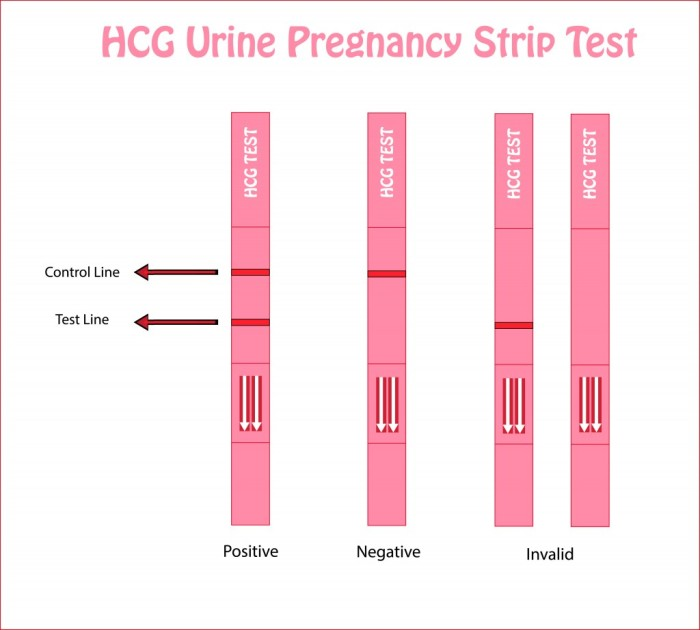 Hcg importance in pregnancy, Hcg significance in pregnancy.